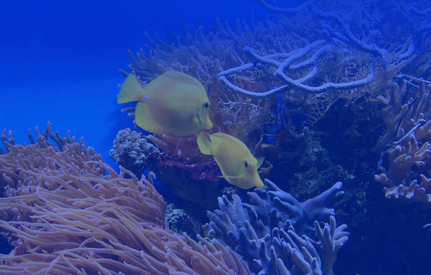 Discover theUnderwater World
